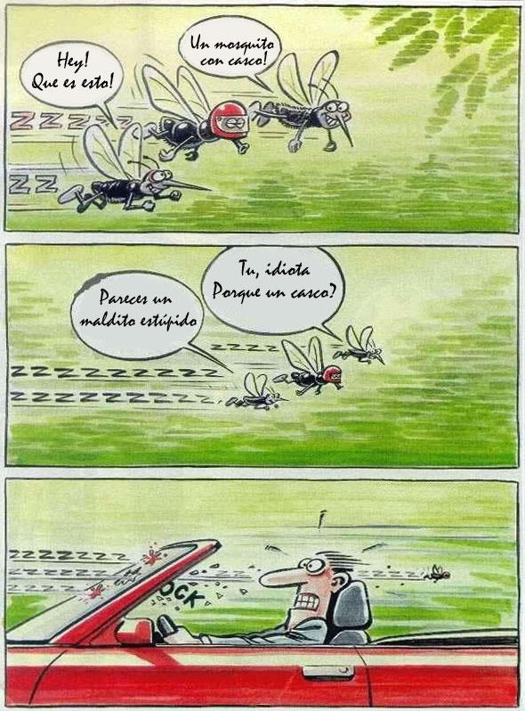 mosquitowithhelmet